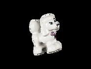 41300 Le concours canin pour chiots 8
