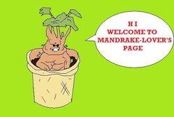 Mandrake2.jpg
