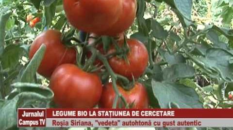 LEGUME_BIO_LA_STATIUNEA_DE_CERCETARE