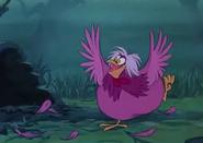 Mim-poule