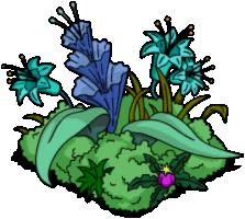 Arbuste rigellien