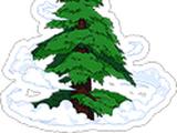 Le plus gros séquoia du monde