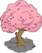Vieux cerisier