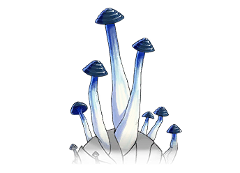 Golden Lifeshroom