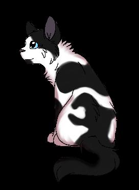 Gerboise