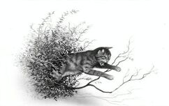 Étoile du Tigre.jpg
