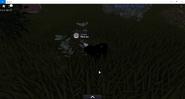 Herbe-Herbe à chat (terrain) -Edition idéale