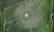 Les-toiles-des-araignees-possedent-un-pouvoir-secret-pour-les-aider-a-attraper-leurs-proiesUNE.jpg