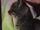 Ciel d'Encre/Bambou, mon chaton trop mignon !