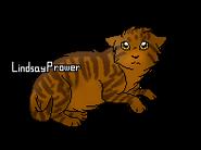 Poil de Fougère chaton