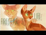 Firestar 's Life - Warriors - In the name of love