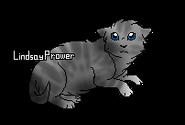 Millie (chaton)