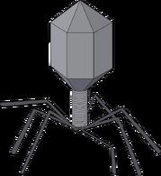 Vírus Bacteriófago