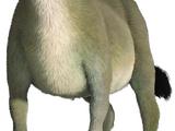 Burro (Shrek)