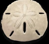 UI TX Metainventory Souvenirs Seashell