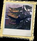 MI Pássaro Azul.png