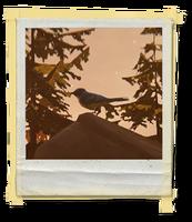 FotosLIS-Pássaro2