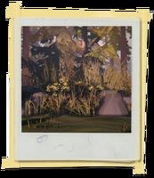 FotosLIS-Cervo2