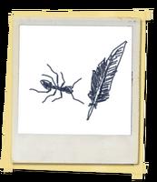 FotosLIS-Formigas1