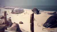 Anomalia Baleias2