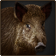 Boar stable.png
