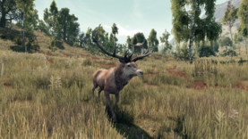 Animal deer.png