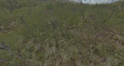 Gras soil spring.png