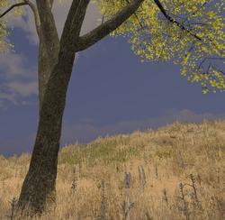 Elm tree trunk.png