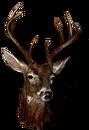Big deer head.png
