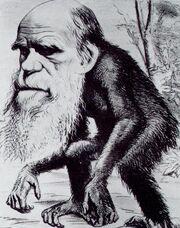 Charles Darwin ape.jpg