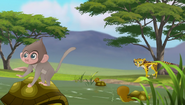 Baboons (223)
