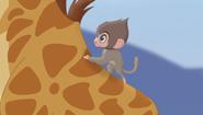 Baboons (252)