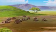 Baboons (490)