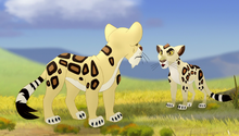 The-trouble-with-galagos (428).png