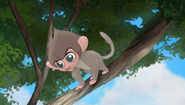 Baboons (197)