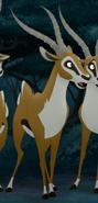 Male-Gazelle