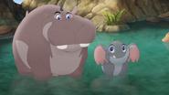Follow-That-Hippo! (207)
