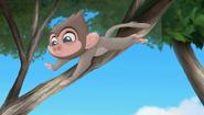 Baboons (200)