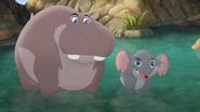 Follow-That-Hippo! (205)