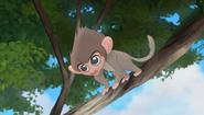 Baboons (195)