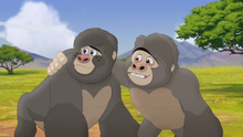The-lost-gorillas (112).png