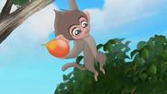 Baboons (192)