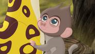 Baboons (238)
