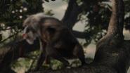 Lionking2019-animationscreencaps.com-11018