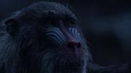 Lionking2019-animationscreencaps.com-12578