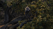 Lionking2019-animationscreencaps.com-8802