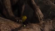 Lionking2019-animationscreencaps.com-8748