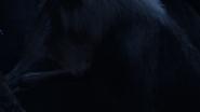 Lionking2019-animationscreencaps.com-1045
