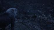 Lionking2019-animationscreencaps.com-12551