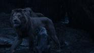 Lionking2019-animationscreencaps.com-12593
